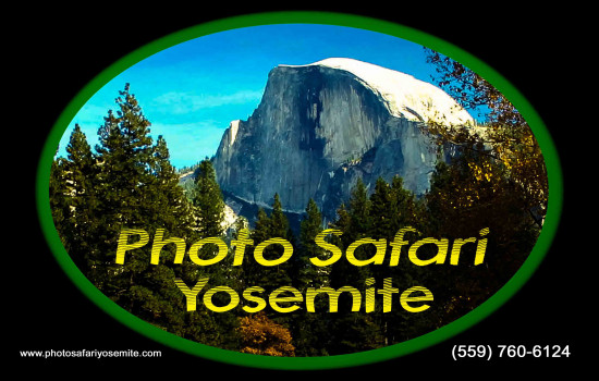 Photo Safari Yosemite